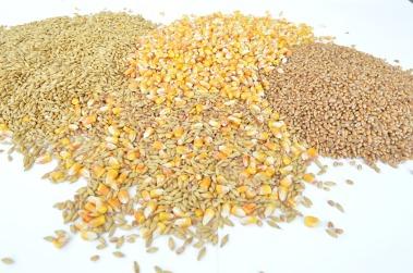 grains-1173812_960_720